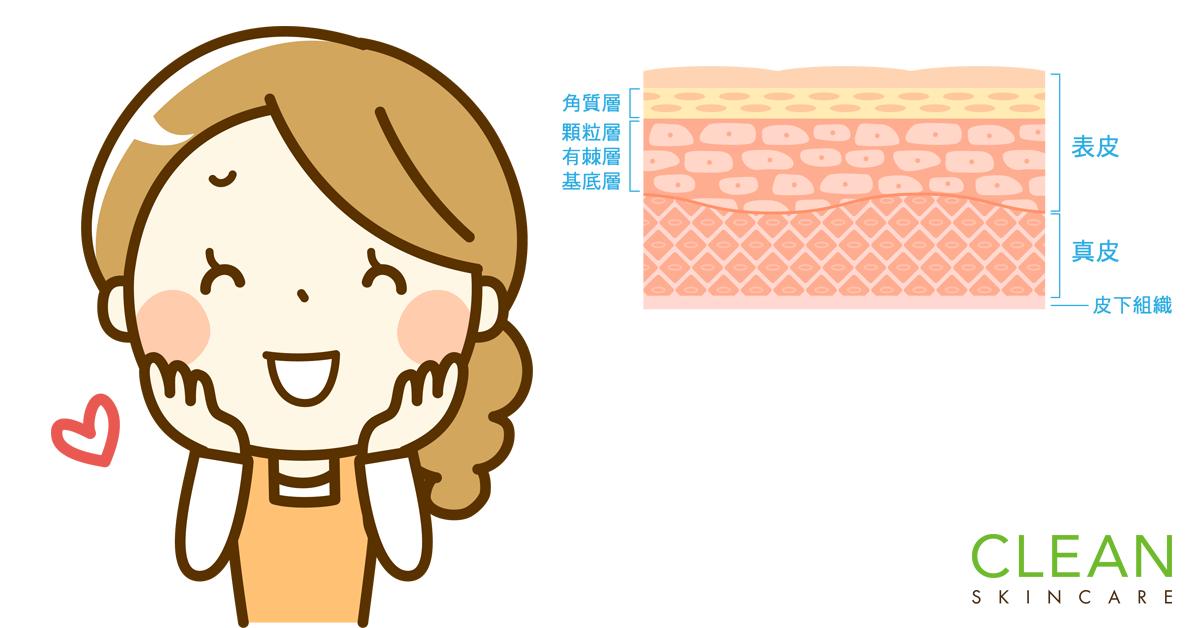 CLEAN Blog - 增加膠原蛋白會令皮膚更厚?