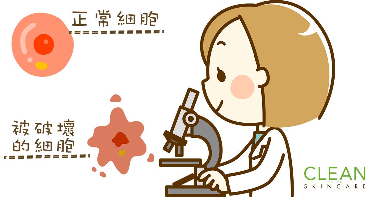 CLEAN Blog - 自由基會分解骨膠原!?