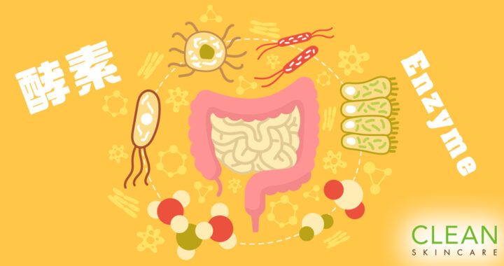 CLEAN Blog - 食酵素可能引致大腸癌?