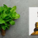 CLEAN Blog – 要幾多植物先能提鍊出一滴香薰精油?