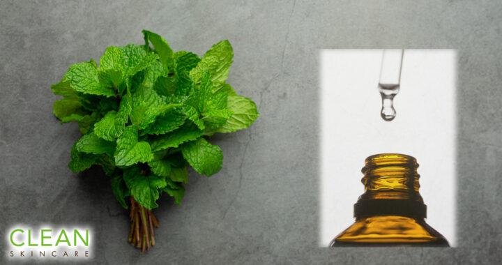 CLEAN Blog - 要幾多植物先能提鍊出一滴精油?